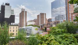 Zelenih površin v velikih mestih ni prav veliko