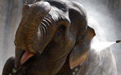 S sloni ni šale.
