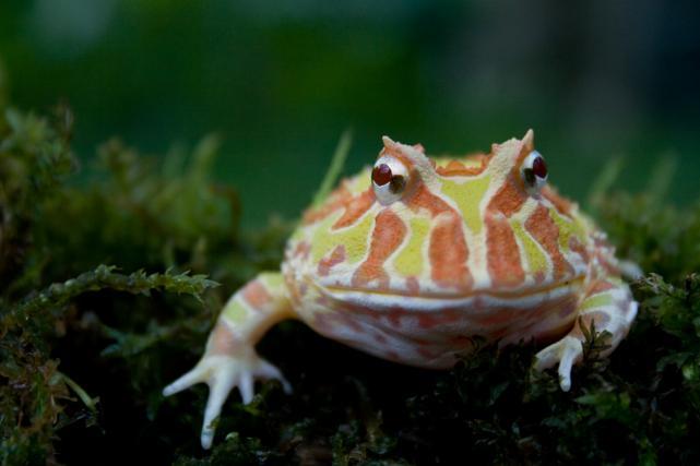 Žabe poleti potrebujejo večji nadzor temperature in vlažnosti