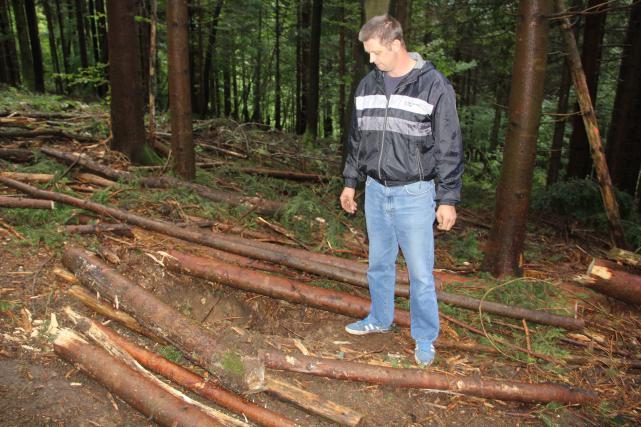 Vhod je bil zakrit z lesom